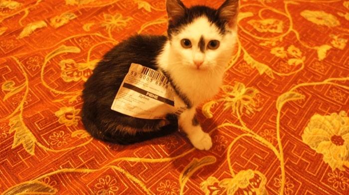 Акція «Подаруй кота!»