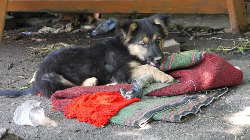 «Когда дороже дома уличные псы…»