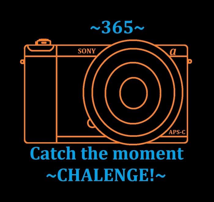 Жахнем фото-проектик? 365!