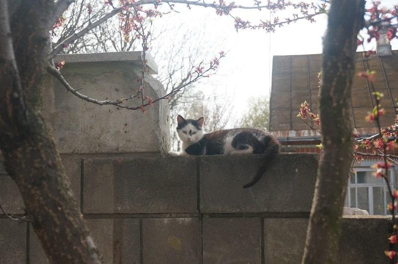 Day 42. Почти мартовский кот