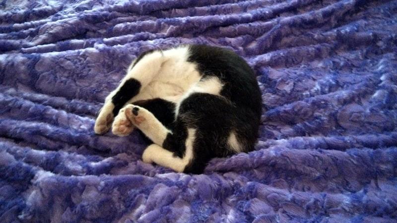 Day 119. Безголовый кот