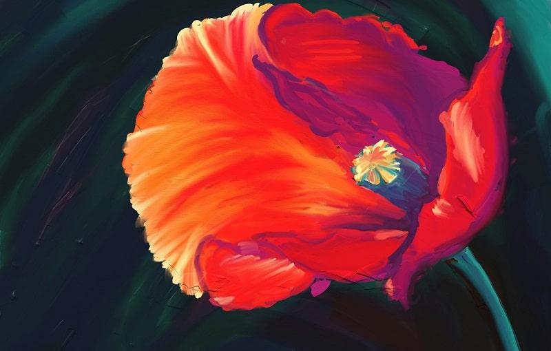 art-cvetok-mak-krasnyy-min