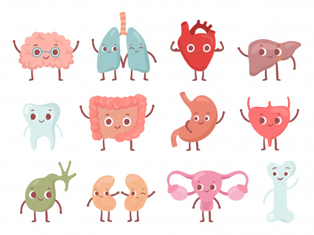 healthy-biological-organ-smiling-lung-happy-heart-funny-brain-smile-organs-cartoon-isolated-character-set_102902-760
